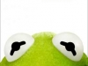 Muppets-kermit-face